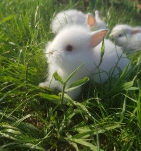 Кролики декоративные пушистые