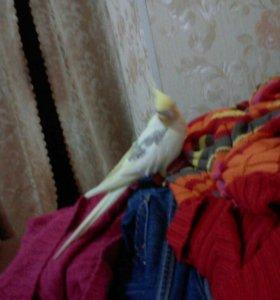 Возьму любого попугая