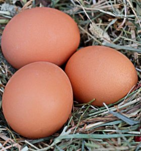 Куриное домашнее яйцо