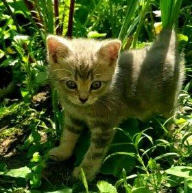 1,5 месячные котята от умной кошки
