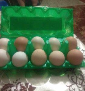 Яйцо деревенское 100%