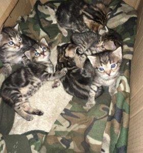 Котята в добрые руки.3 девочки и 3 мальчика