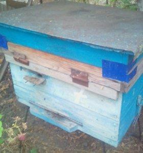 Улья с пчёлами
