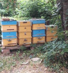 Пчелинные улиуи