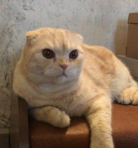 Котик для вязки, ждёт свою невесту.