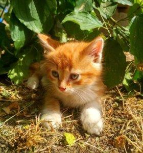 Милые котята ищут мам и пап