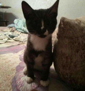 Котенок в добрые руки 4-5 месяцев