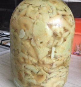 Грибы волнушки соленые