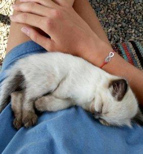Кошечка 5 недель