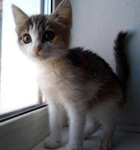 Котёнок (девочка) в добрые руки!!!