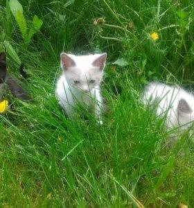 Чудесные котята - фотомодели