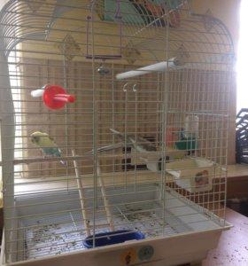 Продаются попугайчики