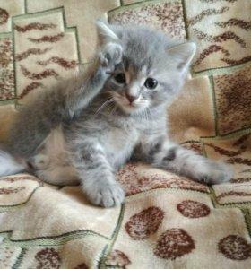 Плюшевые котики ищут хозяев