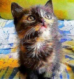 Кошечка милашка)