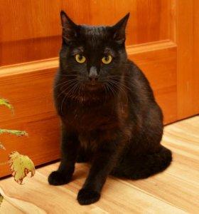Молодой котик в поиске ответственного хозяина
