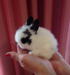 Декоративные крольчата милашки