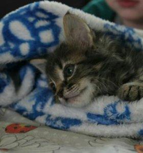 кот гупик