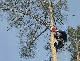спил деревьев с вывозом