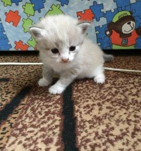 Котёнок девочка