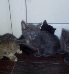 Красивые котики
