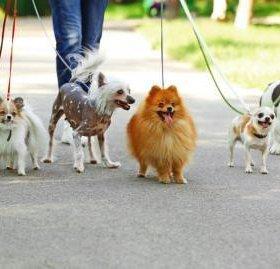 Выгул собак.