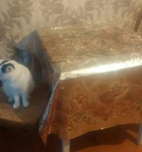 стол стульями