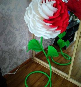 Ростовые цветы,интерьерные цветы