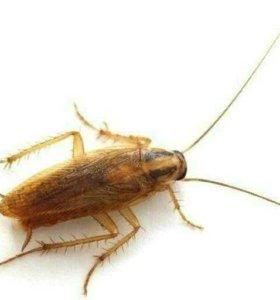 Обработка тараканов клопов и комаров