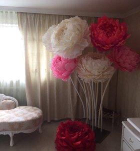 Интерьерные цветы в наличии и на заказ.