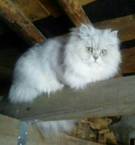 Котик-вискас.;-)