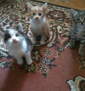 Озорные котята в добрые руки