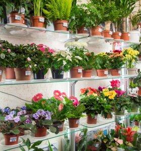 Передержка комнатных цветов