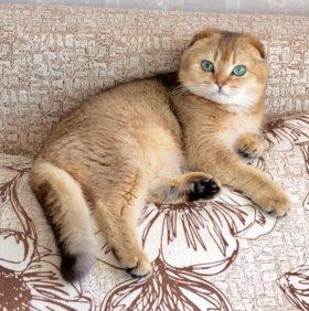Золотой котик на вязку