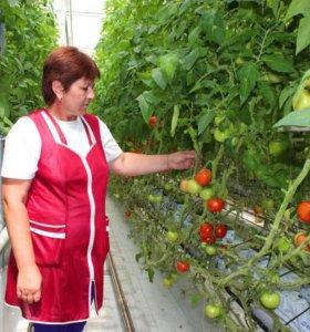 Работники в тепличного хозяйства