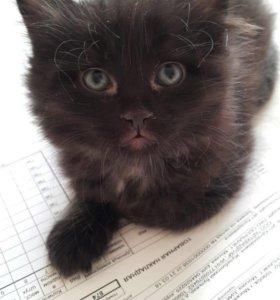 Котенок ищет дом!❤️