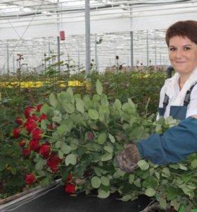 Работник тепличного комплекса с цветами.