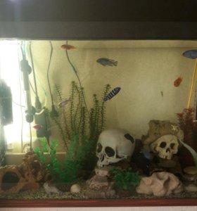 Аквариум с рыбками и всем необходимым 100л