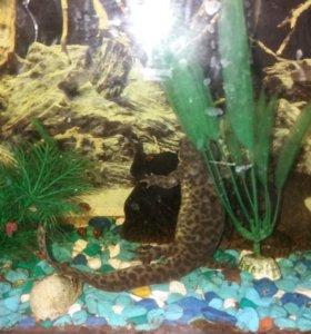 Тритон вместе с аквариумом