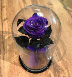 Роза в Колбе 28/30 см