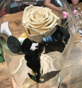 Бежевая роза в Колбе 28/30 см