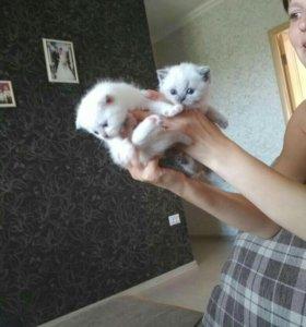 Плюшевые котятки.