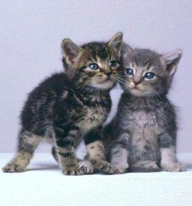 Котята (3) - штуки