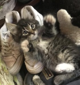 Котёнок в добрые руки) оплата наличными или кормом