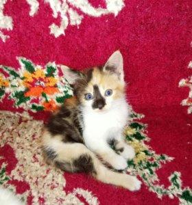 Котята от домашней кошки - мышеловки.