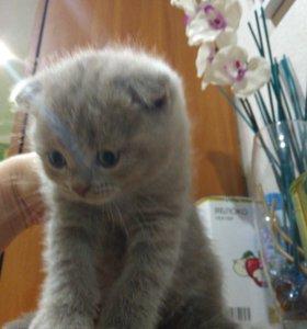 Шоколадные котята