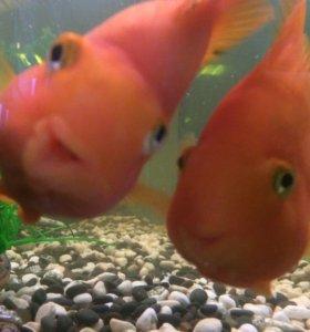 Качественная чистка аквариума