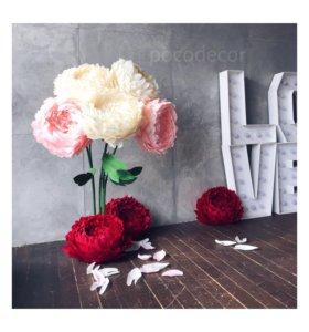 Интерьерные цветы, ростовые цветы