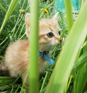Котенок MR.LIS
