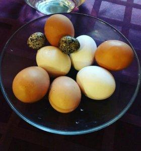Перепелиное и куриное яйцо.