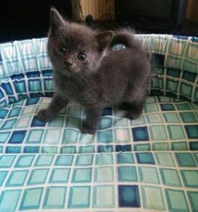 Котик 1месяц